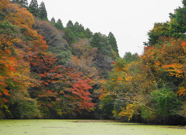 rs-161127_21_亀山湖の紅葉・SH(亀山湖クルーズ) (62)