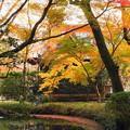 rs-161129_11_放生池付近の紅葉・SH(平林寺) (70)
