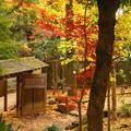 Photos: rs-161130_08_日本庭園の紅葉・SH(等々力渓谷) (12)