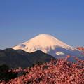 rs-170213_32_河津桜と富士山・SL(松田山) (4)
