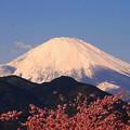 rs-170213_56_富士山と河津桜・SL(松田山) (11)