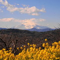 rs-170213_79_菜の花と富士山・SL(吾妻山) (2)