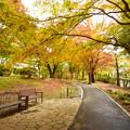 Photos: yama紅葉の小径