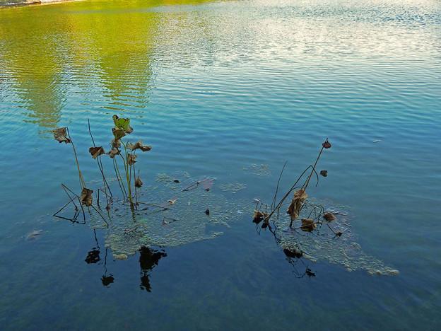 Photos: 秋の水辺