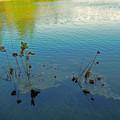 写真: 秋の水辺