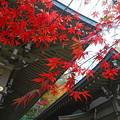 写真: 紅葉 高幡不動