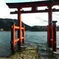 写真: 箱根神社 1
