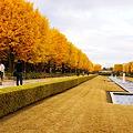 Photos: 昭和記念公園  紅葉