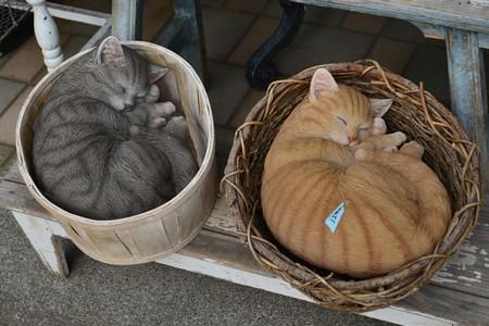 桶猫&籠猫