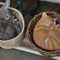 写真: 桶猫&籠猫