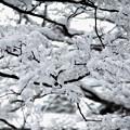 写真: 京都御所-0197