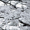 Photos: 京都御所-0197