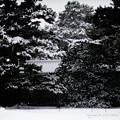 写真: 京都御所-0203