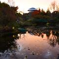 Photos: 夕刻の池