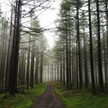 Photos: 靄にけぶる森へ