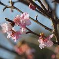 Photos: 春一番でしたね♪