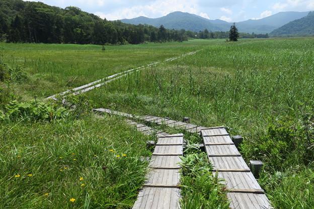 160805-70尾瀬・見晴への木道