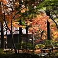秋色に・・・