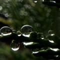 写真: 雨粒のシンフォニー