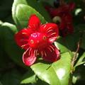ウーパールーパーの花。