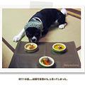 写真: kizuna06