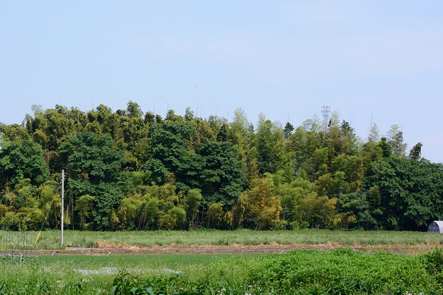 竹の秋_16529