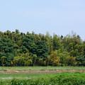 Photos: 竹の秋_16529