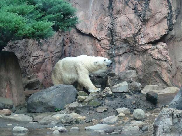 よこはま動物園ズーラシアDSC01878