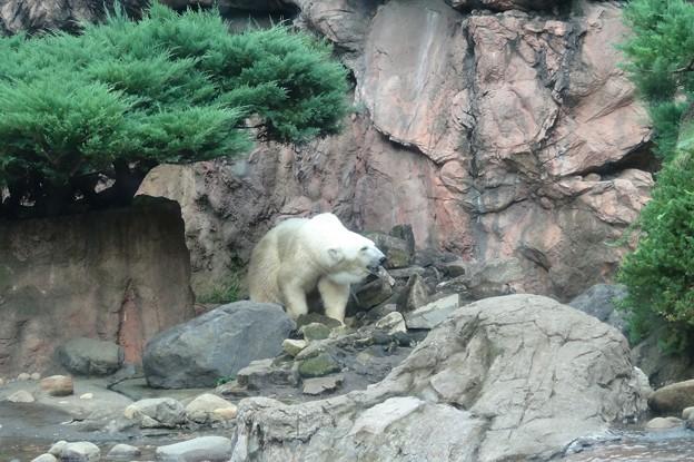 よこはま動物園ズーラシアDSC01880