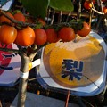 Photos: 京成バラ園オータムフェア2016DSC01976