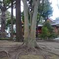 Photos: 上総国分寺跡@市原DSC02918