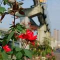 バラと大阪モノレール