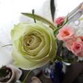 Photos: 緑のバラ
