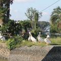 写真: ペリカン島