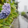 「横十間川・水辺の散歩道」