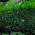 写真: ハケ上にも咲く