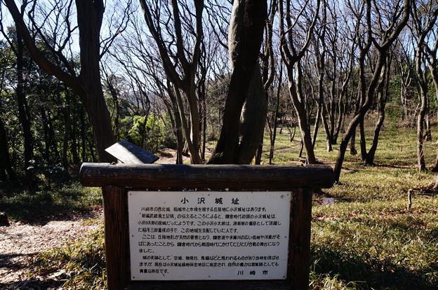 Photos: 小沢城址