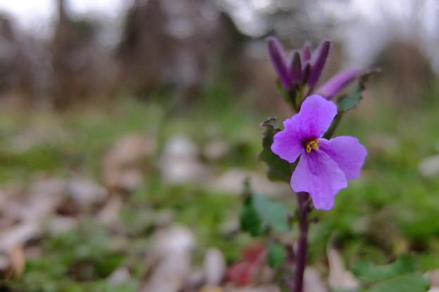 写真: 足許に春