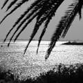写真: 追憶の海