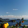 写真: ミカン畑から見る竜崎