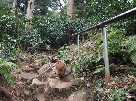 佐助稲荷神社6