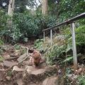 写真: 佐助稲荷神社6