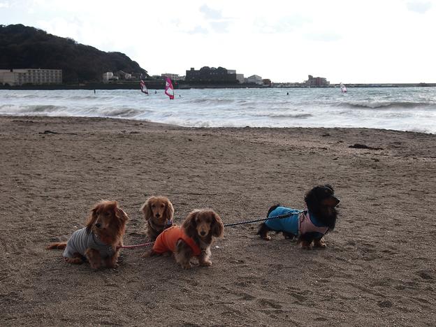 写真: 逗子海岸の砂浜