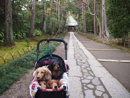 鎌倉寿福寺の石畳