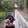 写真: 鎌倉寿福寺の石畳