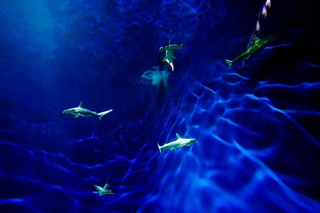 Photos: DEEP BLUE