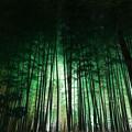 陰の世界、竹林