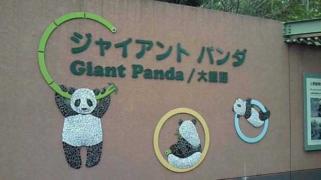 本日10月28日はパンダの日ということで、まずはパンダちゃんにご挨拶。