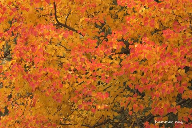 河川敷の紅葉