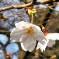 写真: 咲きましたね!(スマホ撮り)